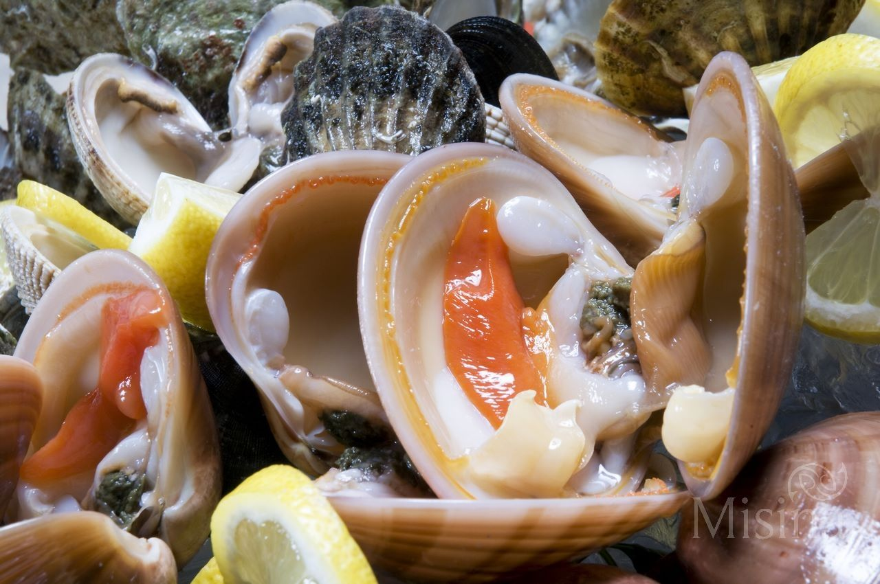 Vongole Shell